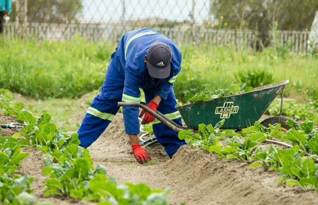 Nota sobre la reforma migratoria 2021 y su vínculo con la falta de mano de obra en los Estados Unidos. La imagen es de un trabajador agrícola.